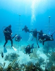 PADI Escorted Dives